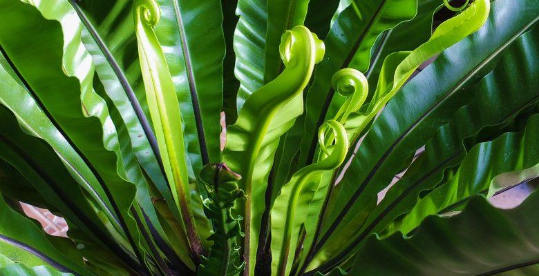 Phyto epuration plantes depolluantes