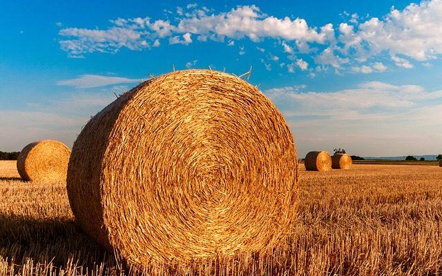 Emploi agricole